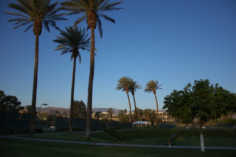 Palm desert1