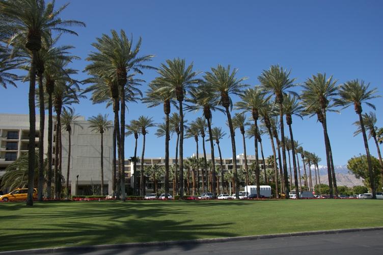 Palm desert3
