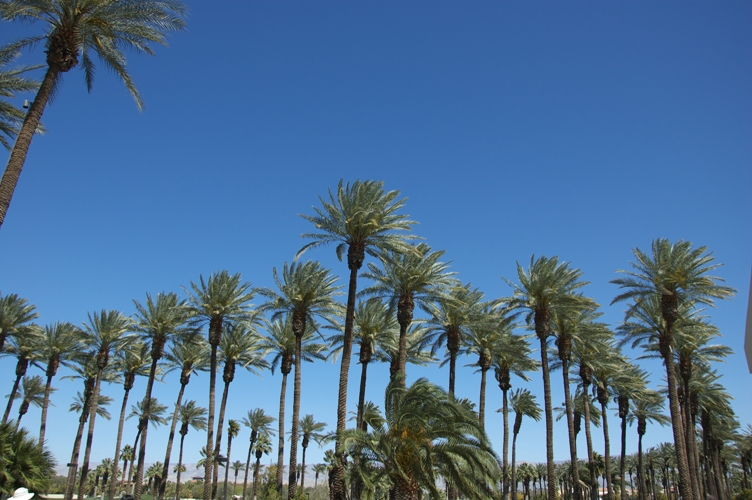 Palm desert9