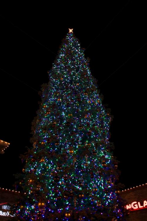 クリスマスツリー@ウッドバーン1