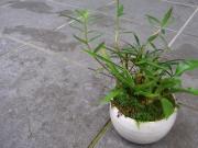 苔盆栽作品