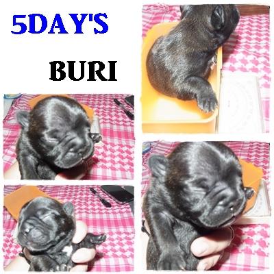 BURI.jpg
