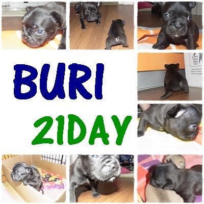 BURI2.jpg