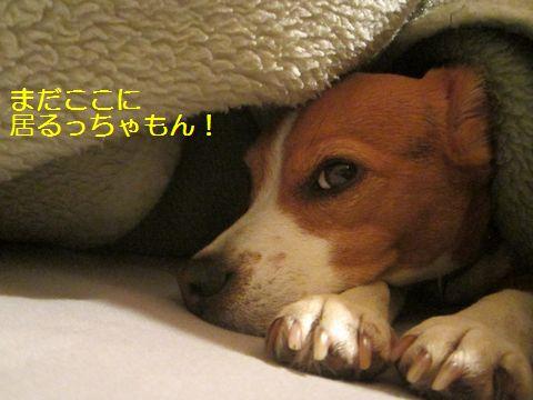 005_20130403120001.jpg