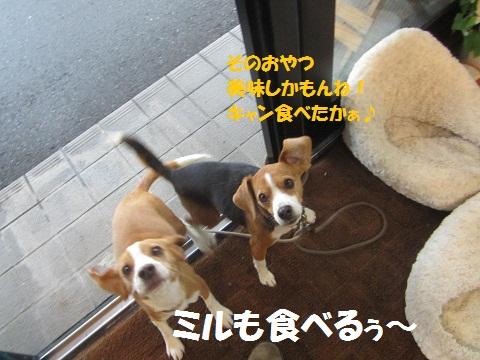 010_20130122171238.jpg