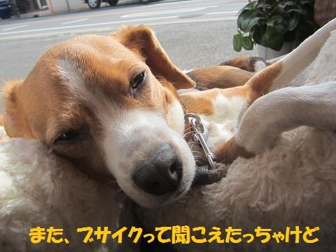 011_20130206140710.jpg