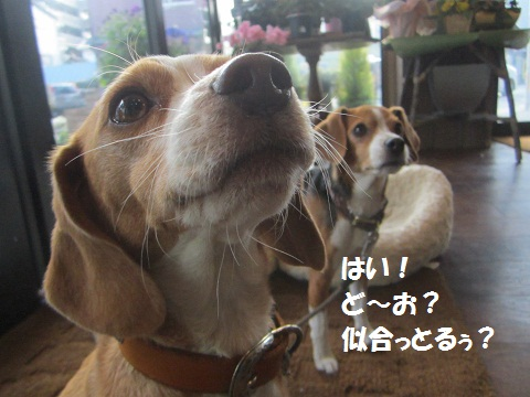 024_20130119104142.jpg