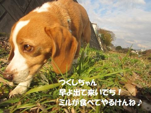 054_20130210133439.jpg