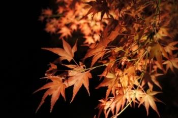 夜紅葉って。。。