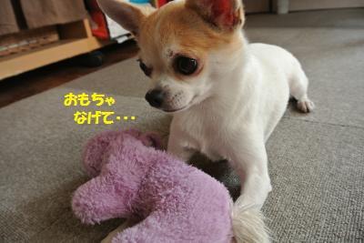 DSC_7514_convert_20140926142517.jpg