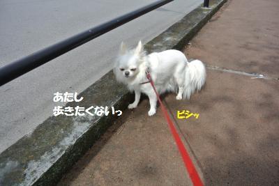 DSC_7610_convert_20140929104521.jpg