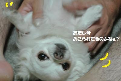DSC_7684_convert_20141003102208.jpg