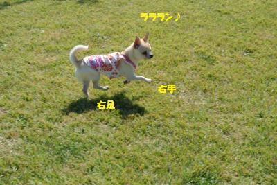 DSC_8099_convert_20141014164243.jpg