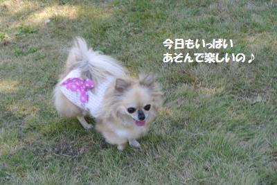 DSC_8102_convert_20141014164339.jpg
