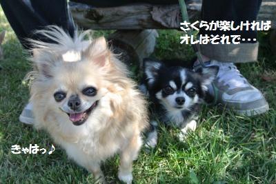 DSC_8113_convert_20141014164506.jpg