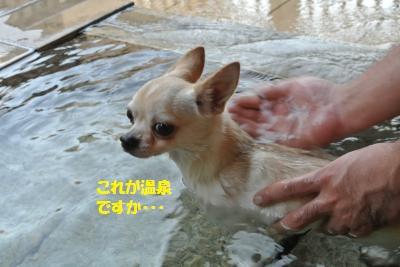 DSC_8155_convert_20141016164718.jpg