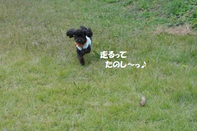 DSC_8211_convert_20141017140923.jpg