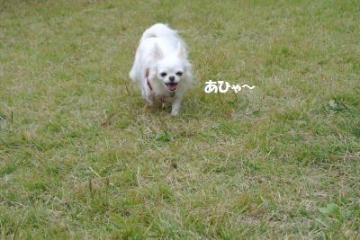 DSC_8216_convert_20141017141018.jpg