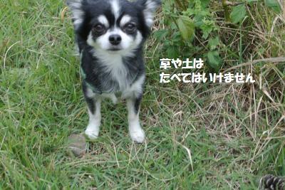 DSC_8229_convert_20141017141154.jpg