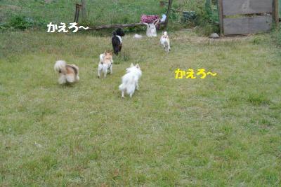 DSC_8234_convert_20141017141212.jpg