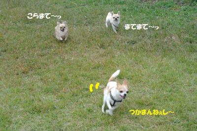 DSC_8246_convert_20141017141256.jpg