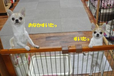 DSC_8298_convert_20141021104134.jpg
