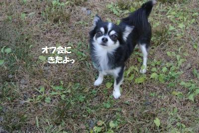 DSC_8339_convert_20141027105752.jpg