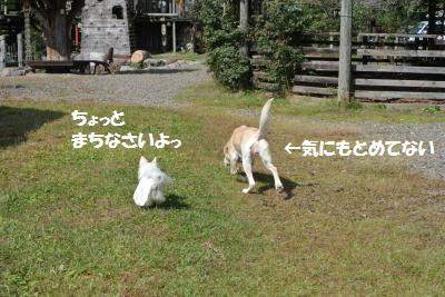 DSC_8345_convert_20141027111132.jpg