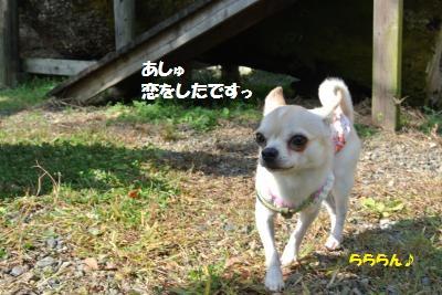 DSC_8355_convert_20141027110000.jpg