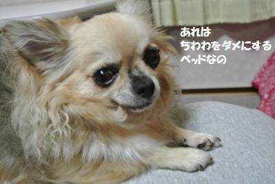 DSC_8410_convert_20141029105332.jpg