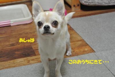DSC_8430_convert_20141030100810.jpg