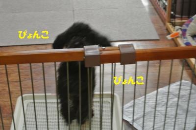 DSC_8448_convert_20141030101016.jpg