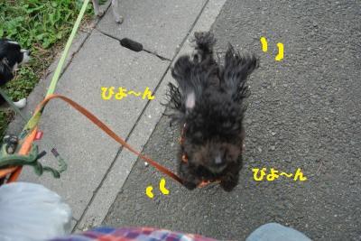 DSC_8551_convert_20141105110731.jpg