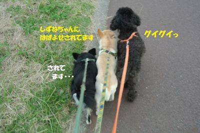 DSC_8575_convert_20141105111018.jpg