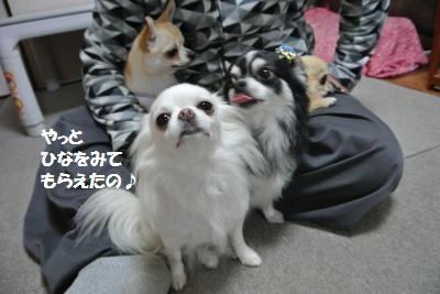 DSC_8660_convert_20141111095714.jpg