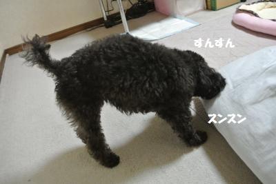 DSC_8799_convert_20141114141112.jpg