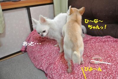 DSC_8927_convert_20141121102816.jpg
