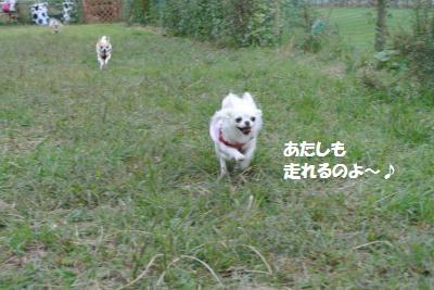 DSC_9017_convert_20141008151915.jpg
