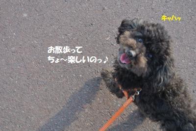 DSC_9018_convert_20141125110251.jpg