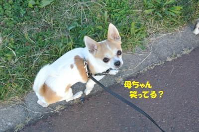 DSC_9025_convert_20141126103558.jpg