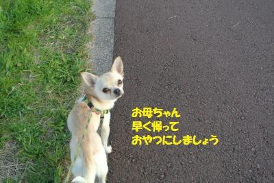 DSC_9034_convert_20141126103643.jpg