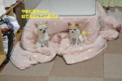 DSC_9051_convert_20141128100231.jpg
