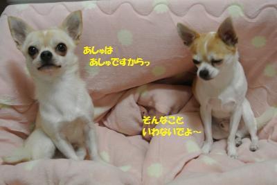 DSC_9052_convert_20141128100241.jpg
