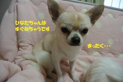DSC_9060_convert_20141128144610.jpg
