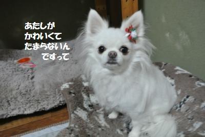 DSC_9221_convert_20141209094312.jpg