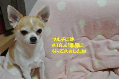 DSC_9296_convert_20141217110831.jpg