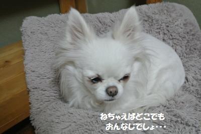 DSC_9397_convert_20141222095648.jpg