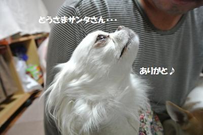 DSC_9482_convert_20141224104507.jpg