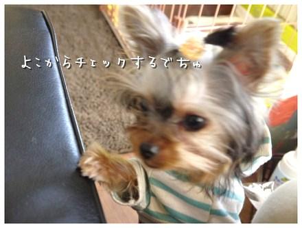 10_20130225133741.jpg
