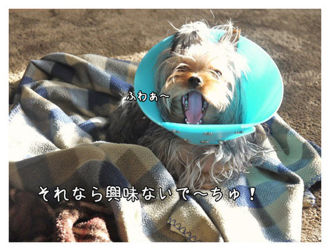 10_20130324113414.jpg